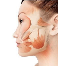 Мышечно-апоневротический слой у женщин